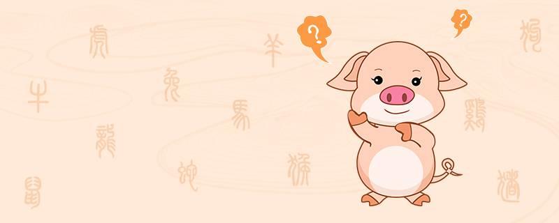 属猪性格特点及脾气-1