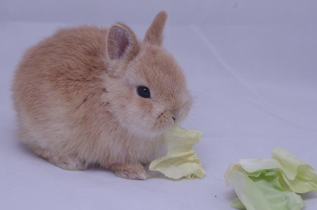 那些十分讨人喜欢的属兔人-1