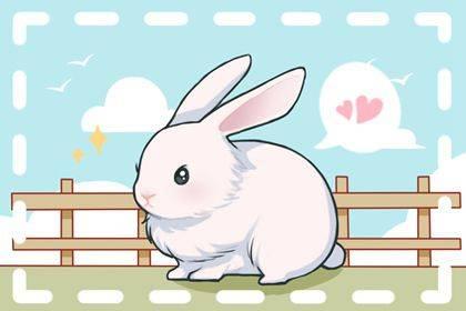 2022年属兔事业运势与事业有利方向-1
