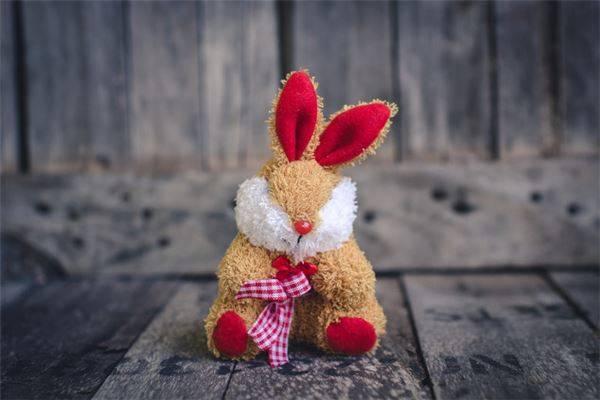 生肖兔2021年运势及运程属兔人2021全年每月运程-1